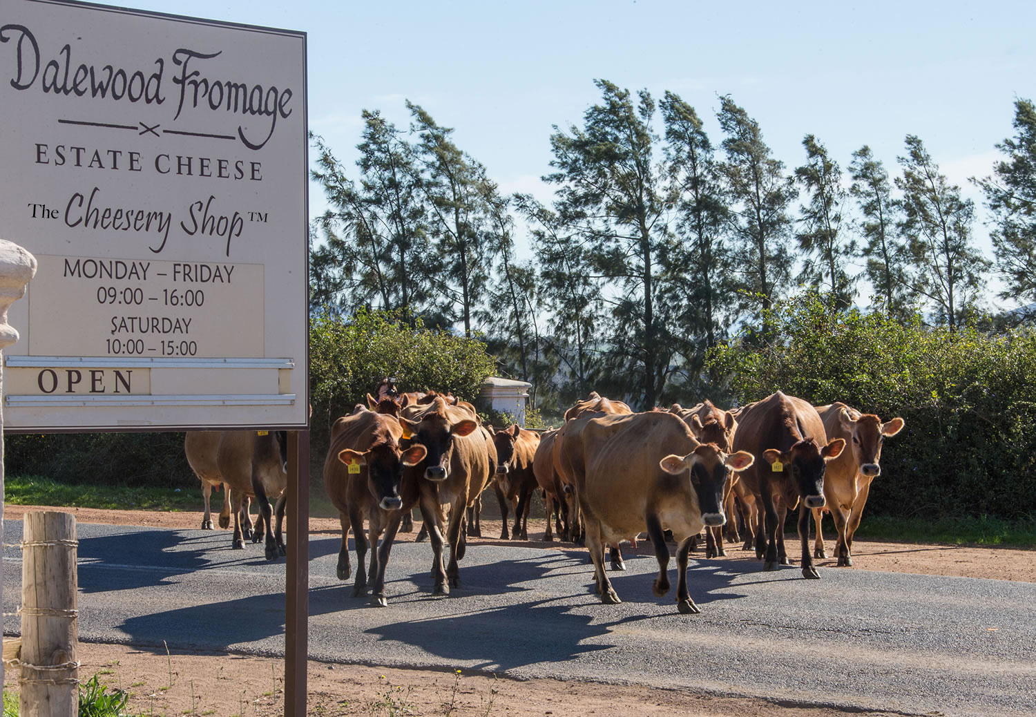 The Cheesery Shop